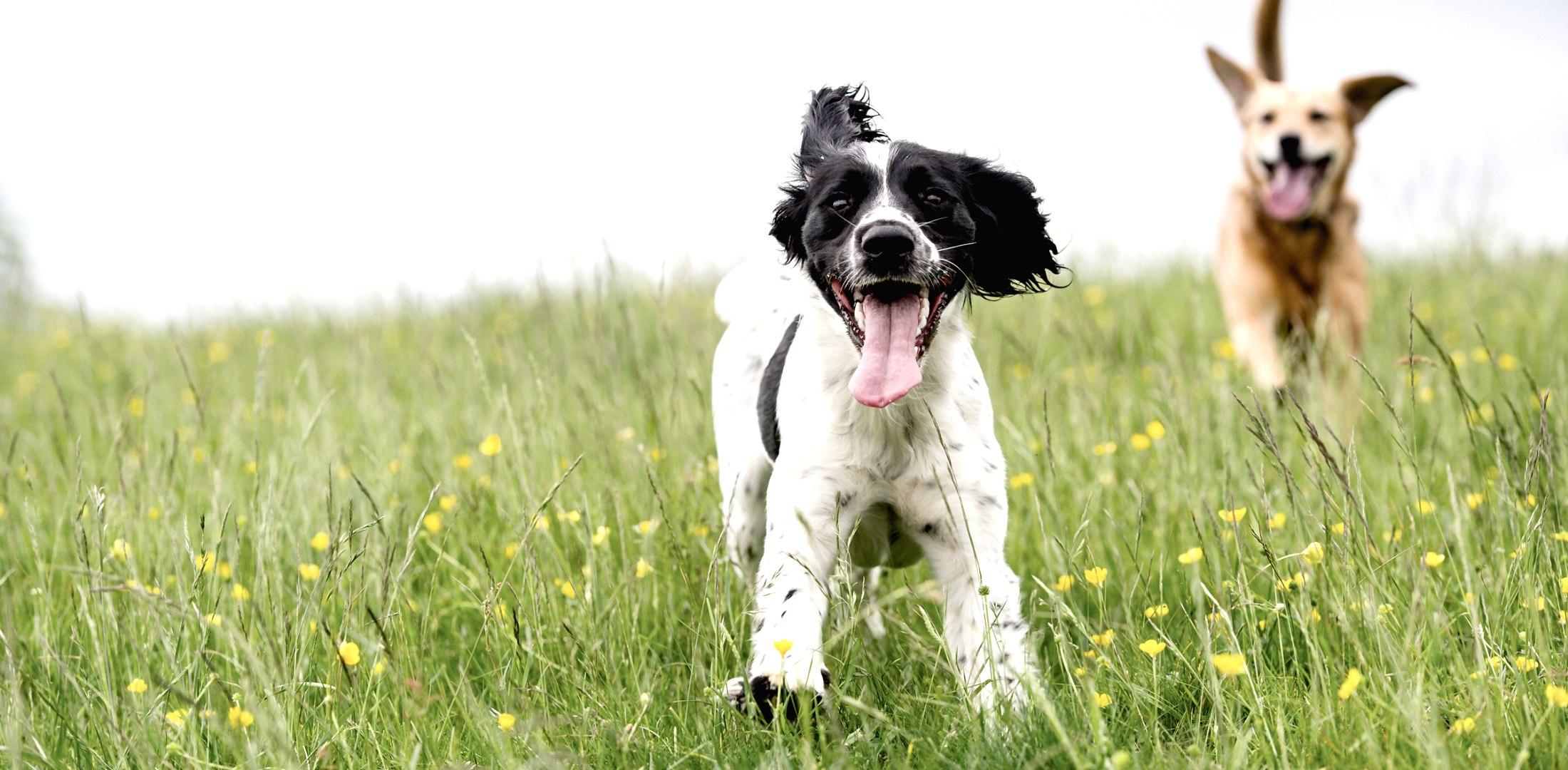 Hundeauslauf, © Shutterstock