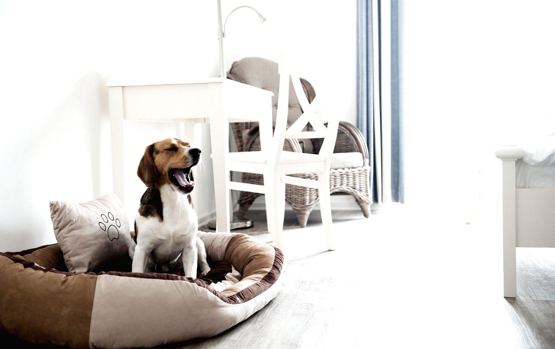 Gastgeber mit Hund, © Pharisäerhof
