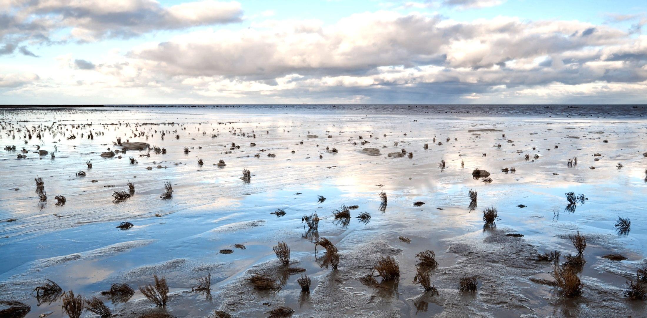 Wattenmeer, © Shutterstock