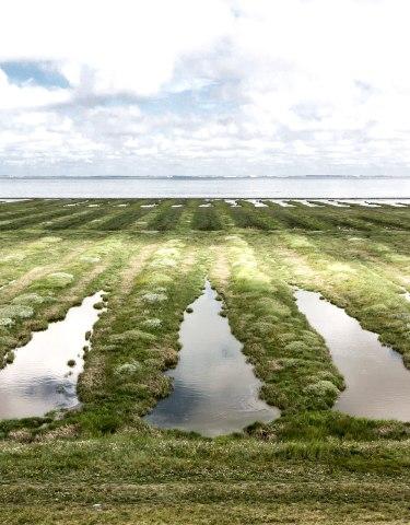 Salzwiesen halbgeflutet, © Shutterstock