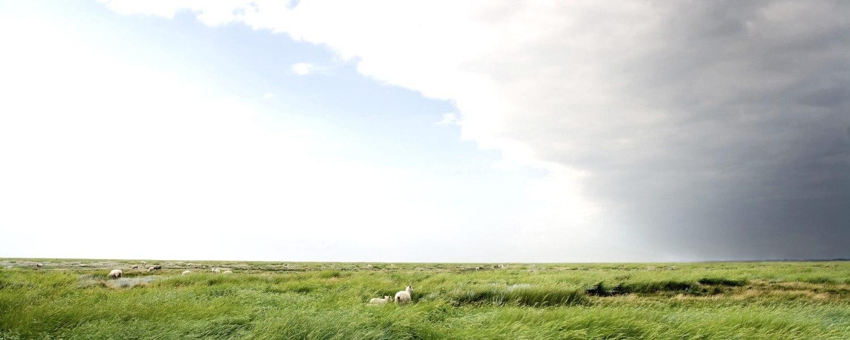 Schafe im Gras, © Shutterstock
