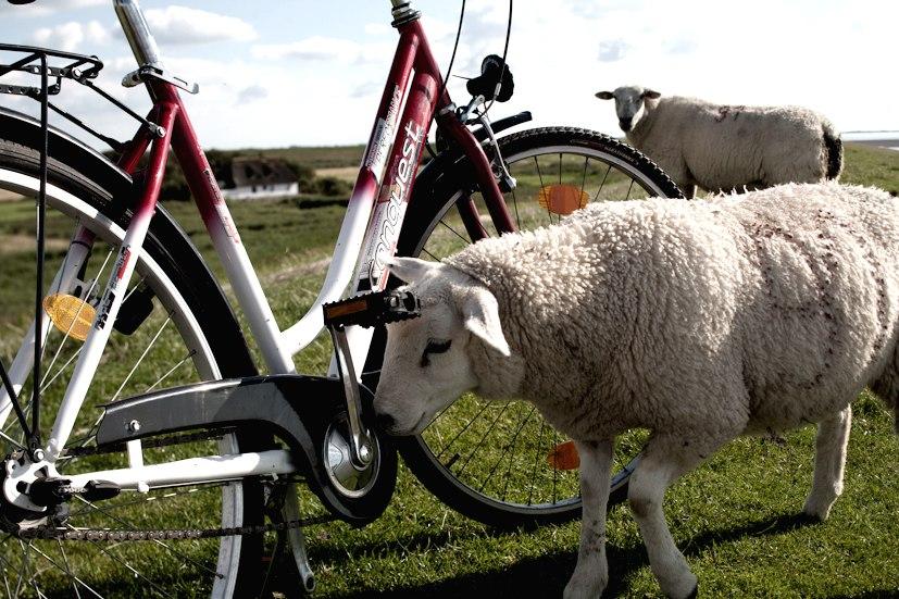 Fahrradfahren Nordstrand